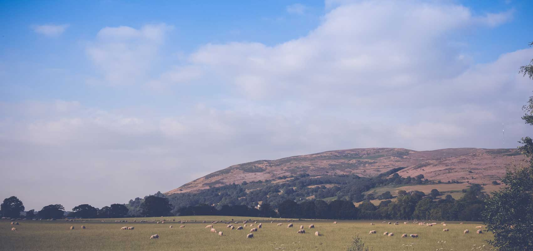Spring in the Clwydian valley, North Wales | Glan Clwyd Isa