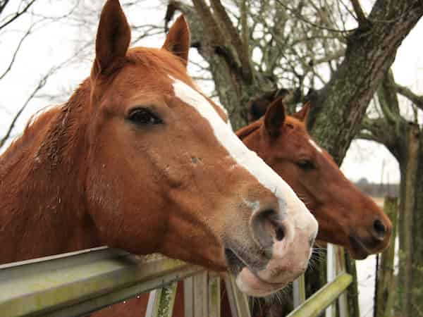 Horse Holidays In North Wales | Glan Clwyd Isa