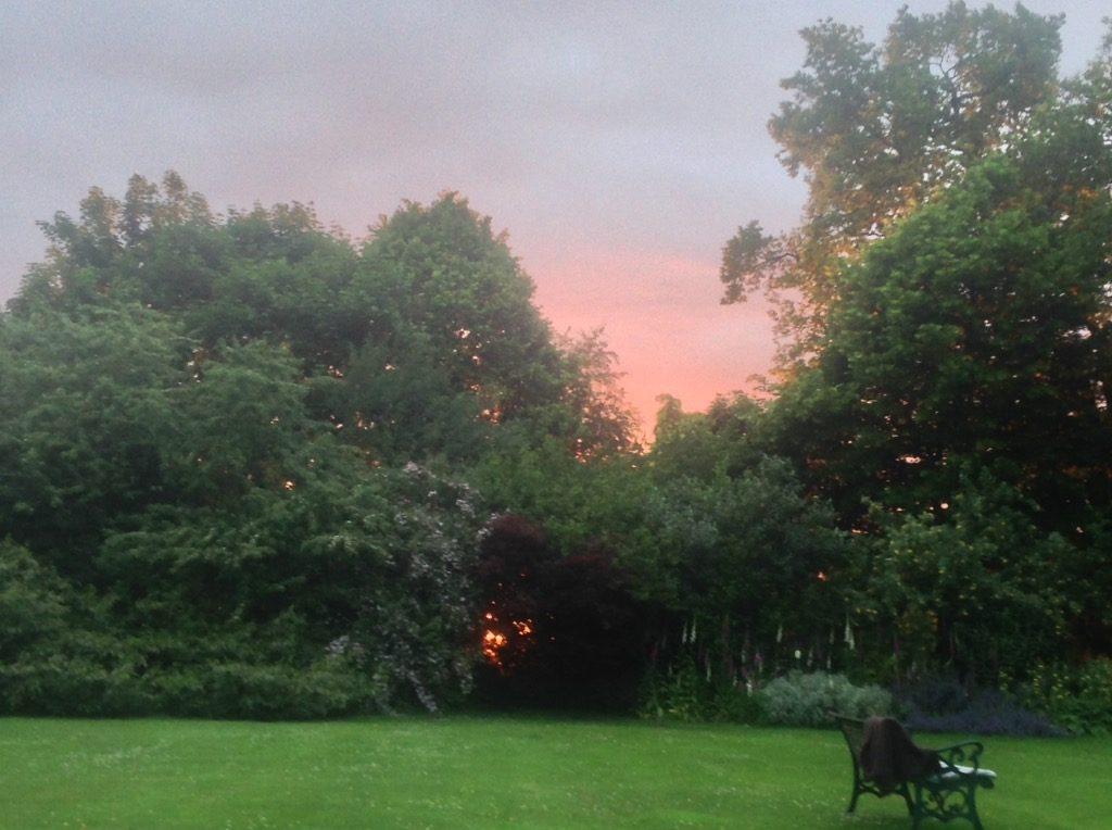 Sunset Through The Shrubs | Glan Clwyd Isa